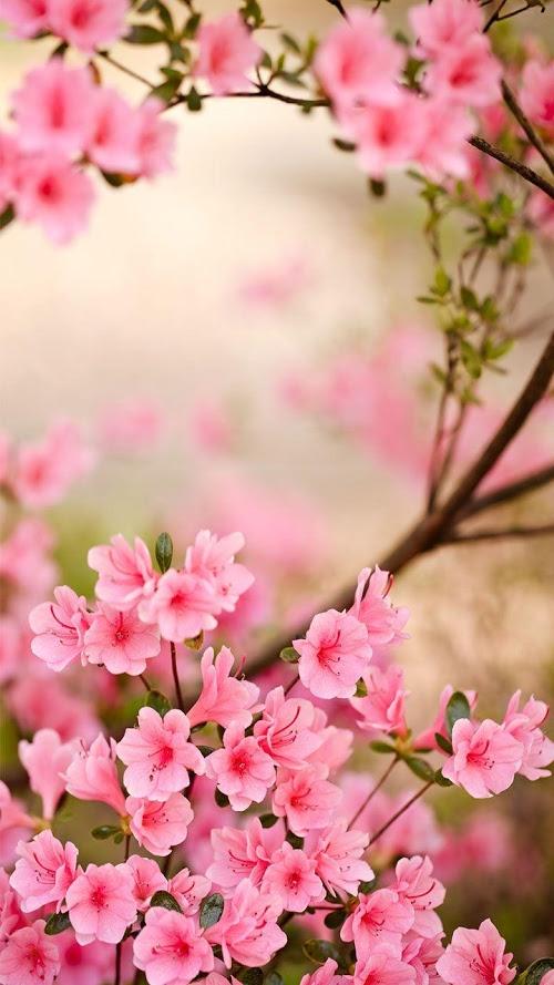 Wiosenne Kwiaty Tapeta Aplikacja Android Instalki Pl